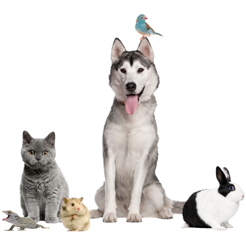 pet care services in Fort Mill & Tega Cay