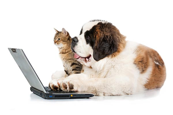 Pet sitting services in Fort Mill and Tega Cay