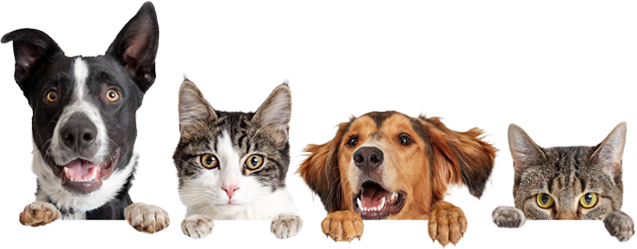 Pet sitting services in Tega Cay