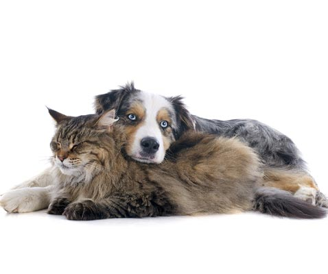 overnight stays with your pet