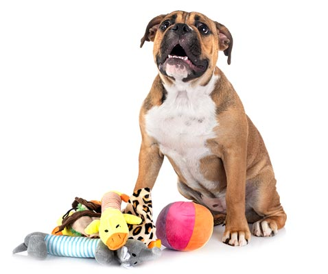 stay & play pet services