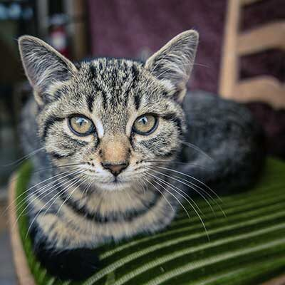 Bentley Cat sitter testimonial