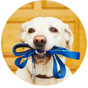Dog pet services in Ft Mill