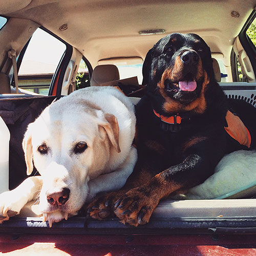Pet sitting testimonials