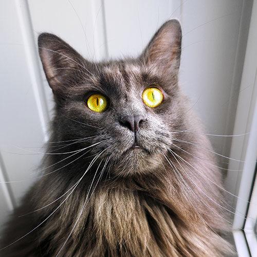 Waterstone pet care testimonial