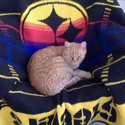 Mr. Mann Cat Sitter Testimonial