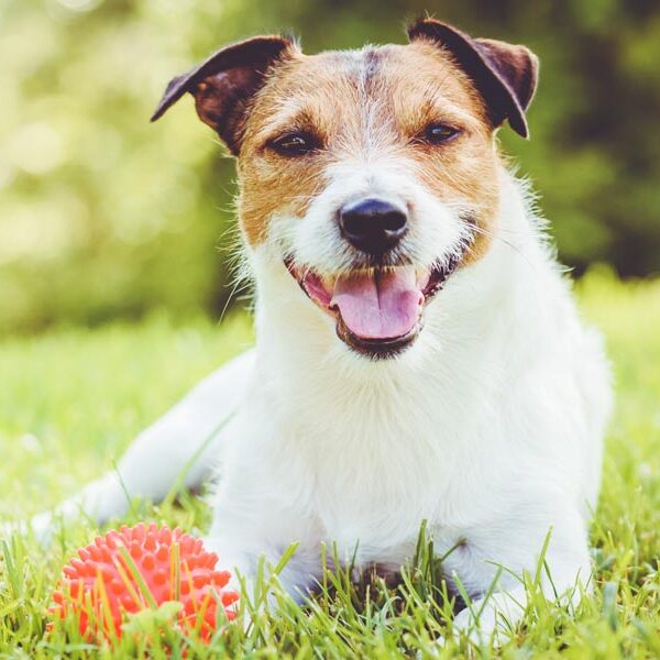 Pet sitting services in Fort Mill & Tega Cay