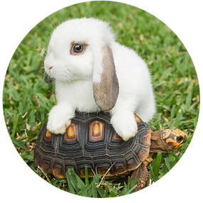 small animal pet care